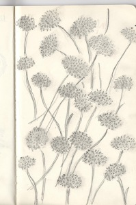 presidio plants sketch