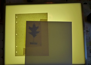 leaf on lightbox
