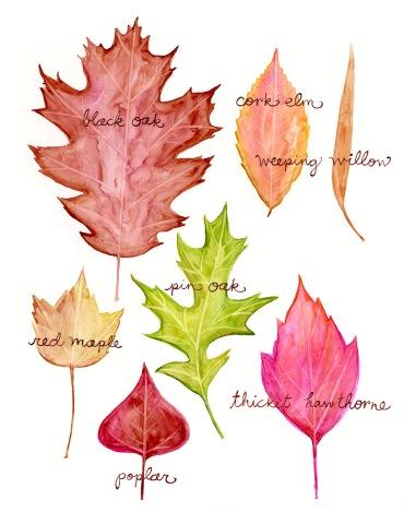 leaves542